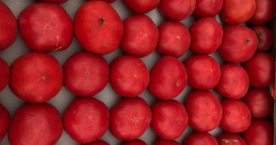 tomatoes from Azerbaijan